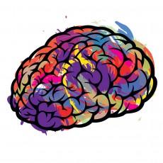 brain_2_no_text